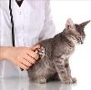 Ветеринарные клиники в Ржеве